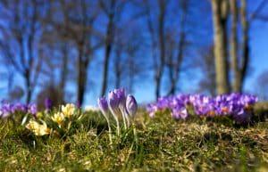 förbered din trädgård inför våren