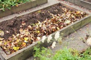 Höstfint i trädgården - Lägg löv i rabatten