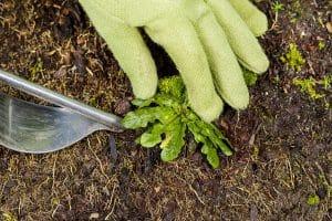 Ogräsrensa och få höstfint i trädgården